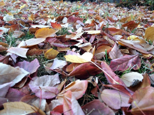 crunchy leaves underfoot